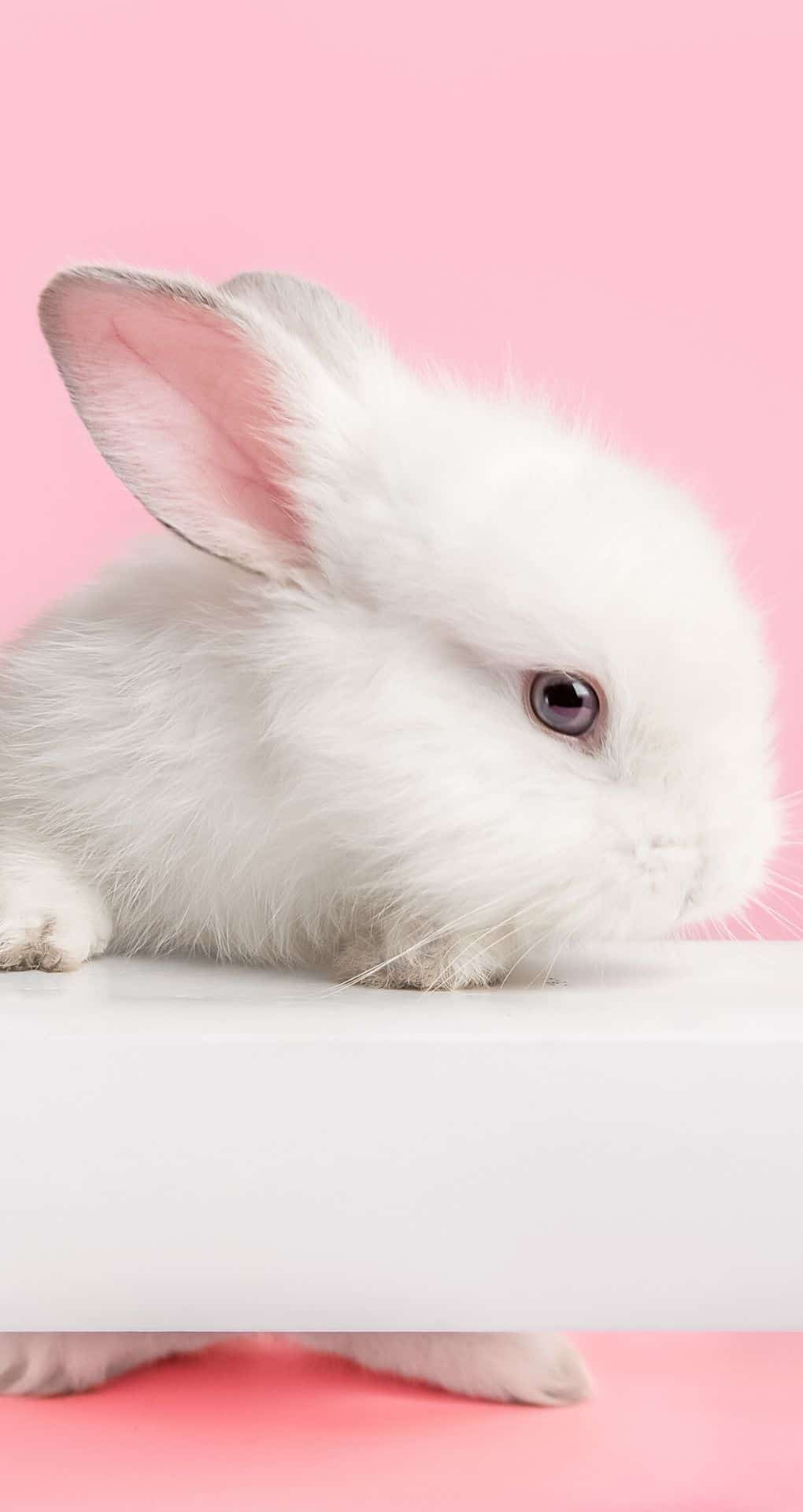 cute iPhone wallpaper with a bunny